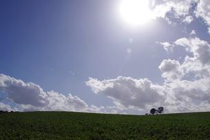 美瑛の丘に立つ親子の木と太陽の写真素材 [FYI00619483]