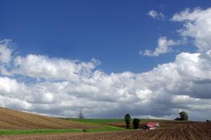美瑛の丘・畑と 赤い屋根の家の写真素材 [FYI00619484]