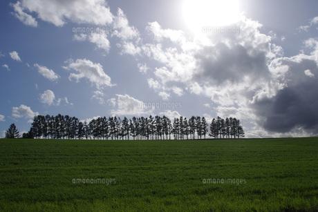美瑛の丘と太陽の写真素材 [FYI00619491]