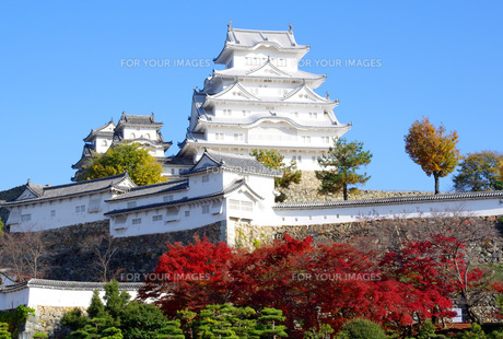 紅葉の姫路城の写真素材 [FYI00619498]