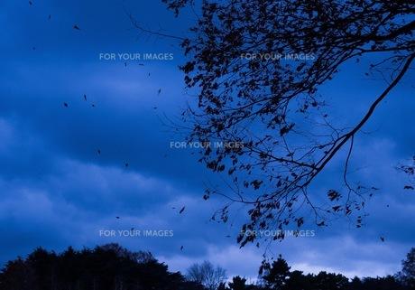 枯葉の写真素材 [FYI00620202]