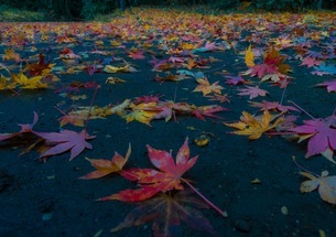 秋の落ち葉の写真素材 [FYI00620230]