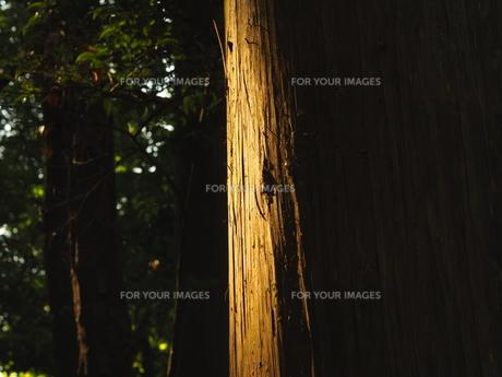 夕日にあたる樹木の写真素材 [FYI00620261]