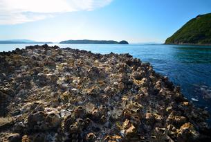 太陽とフジツボと和歌山湾の写真素材 [FYI00621173]