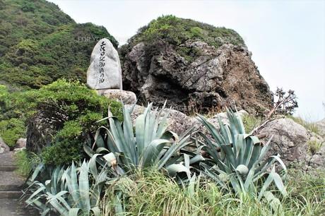 室戸岬国定公園の風景(室戸ジオパーク)の写真素材 [FYI00621304]