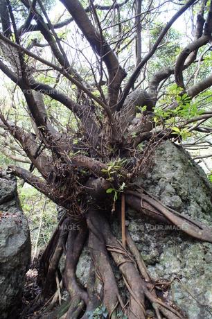 室戸岬国定公園の風景(室戸ジオパーク)の写真素材 [FYI00621306]