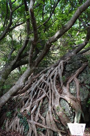 室戸岬国定公園の風景(室戸ジオパーク)の写真素材 [FYI00621307]