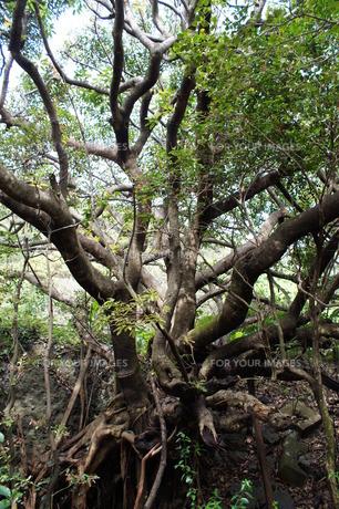 室戸岬国定公園の風景(室戸ジオパーク)の写真素材 [FYI00621308]
