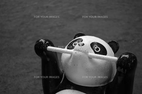 公園のパンダの遊具の写真素材 [FYI00621841]