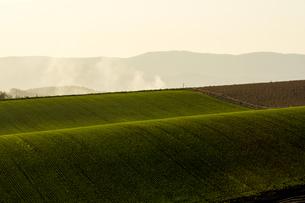 夕日に輝く秋の麦畑の写真素材 [FYI00622530]