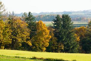 色づいた秋の林の写真素材 [FYI00622537]