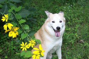 笑顔で見つめる犬と花の写真素材 [FYI00623516]