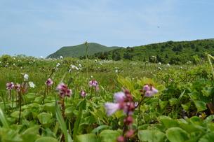 栗駒山 湿原 花畑の写真素材 [FYI00623907]