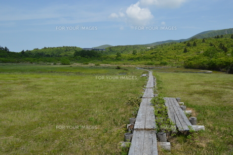 栗駒山 初夏 湿原 木道の写真素材 [FYI00623910]