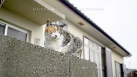 猫島の野良猫の写真素材 [FYI00623911]