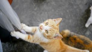 野良猫の写真素材 [FYI00623921]
