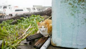 野良猫の写真素材 [FYI00623925]