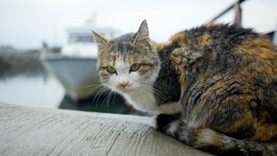 野良猫の写真素材 [FYI00623926]