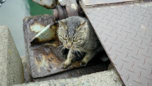 野良猫の写真素材 [FYI00623933]