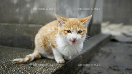 野良猫の写真素材 [FYI00623935]