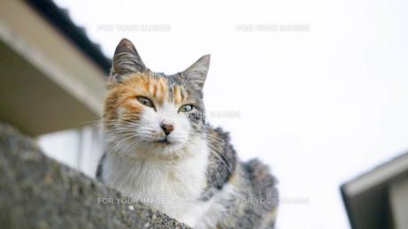 野良猫の写真素材 [FYI00623937]
