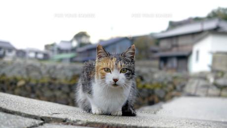 野良猫の写真素材 [FYI00623941]