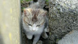 野良猫の写真素材 [FYI00623942]