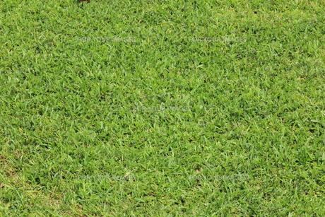 青々とした芝 背景素材の写真素材 [FYI00624165]