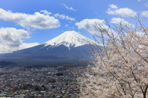 春の桜と富士山の写真素材 [FYI00624674]