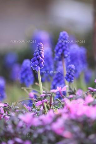 とんがり冒風かわいい花の写真素材 [FYI00624826]