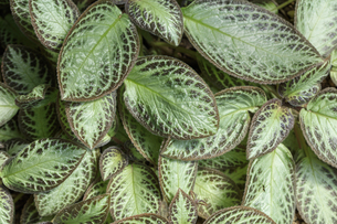 亜熱帯の観葉植物の写真素材 [FYI00624854]