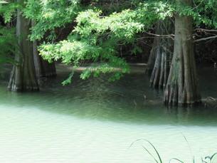 篠栗 九大の森 森林 木 林の写真素材 [FYI00624952]