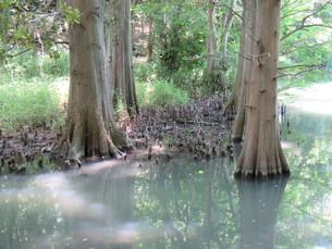 篠栗 九大の森 森林 木 林の写真素材 [FYI00624953]