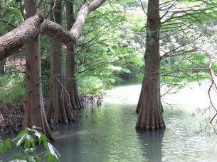 篠栗 九大の森 森林 木 林の写真素材 [FYI00624961]