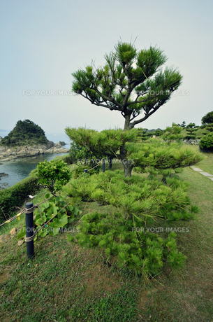 番所庭園の景色の写真素材 [FYI00625289]
