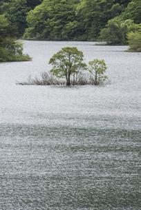 湖上の木立の写真素材 [FYI00625727]