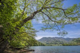 新緑の奥日光湯の湖の写真素材 [FYI00625731]
