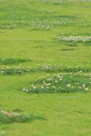 芝生の写真素材 [FYI00626168]