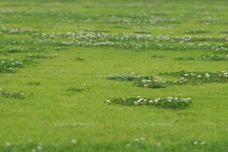 芝生の写真素材 [FYI00626172]