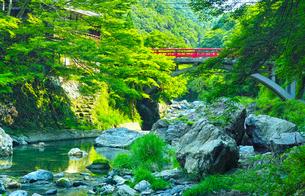 京都清滝 青モミジと渡猿橋の写真素材 [FYI00626274]