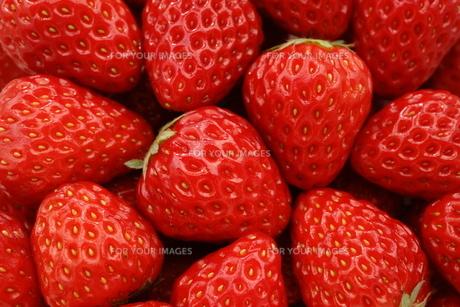苺の写真素材 [FYI00626646]