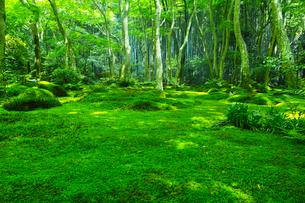苔の森の写真素材 [FYI00626999]