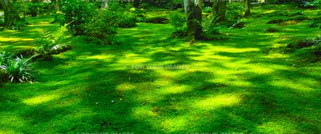 苔の森の写真素材 [FYI00627001]