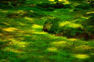苔の森の写真素材 [FYI00627003]