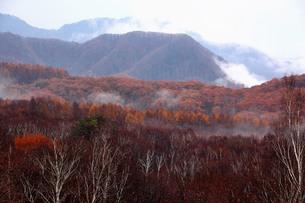 冬を待つ高原の写真素材 [FYI00627143]
