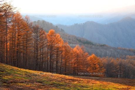 西日の丘の写真素材 [FYI00627144]