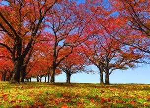 荒川赤羽桜堤緑地の秋の風景の写真素材 [FYI00627148]