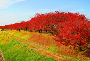 荒川赤羽桜堤緑地の秋の風景の写真素材 [FYI00627149]