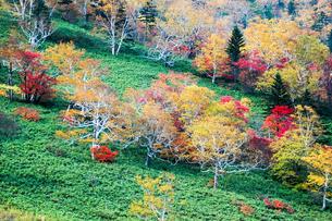 北海道・日勝峠の紅葉(黄葉)の写真素材 [FYI00627182]
