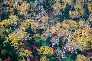 北海道・日勝峠の紅葉(黄葉)の写真素材 [FYI00627183]